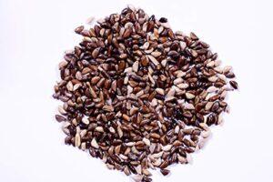 Napier Grass Seeds