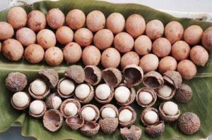 Tamanu Seeds